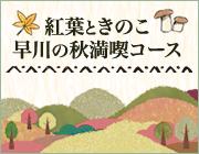 紅葉ときのこ、早川の秋満喫コース