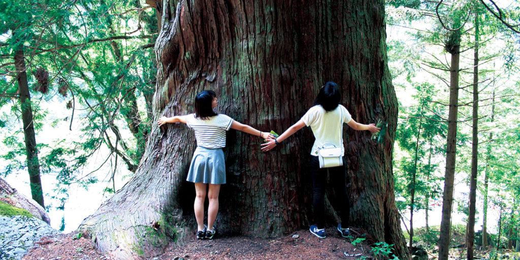 湯島/湯島の大杉