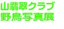 【清水屋】山翡翠クラブ野鳥写真展開催中!